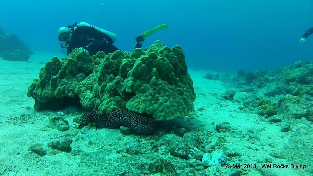 ...And ornery moray eels